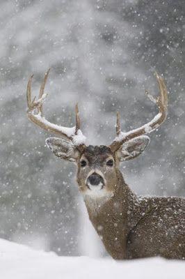 Лучшие картинки зимы на телефон (6)