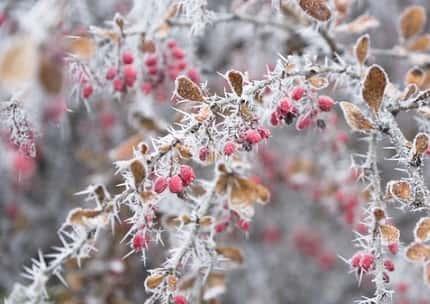 Матрена Зимняя фото и картинки на праздник (12)