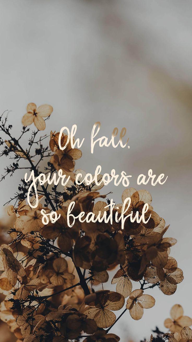 Осень обои на Айфон красивые (10)