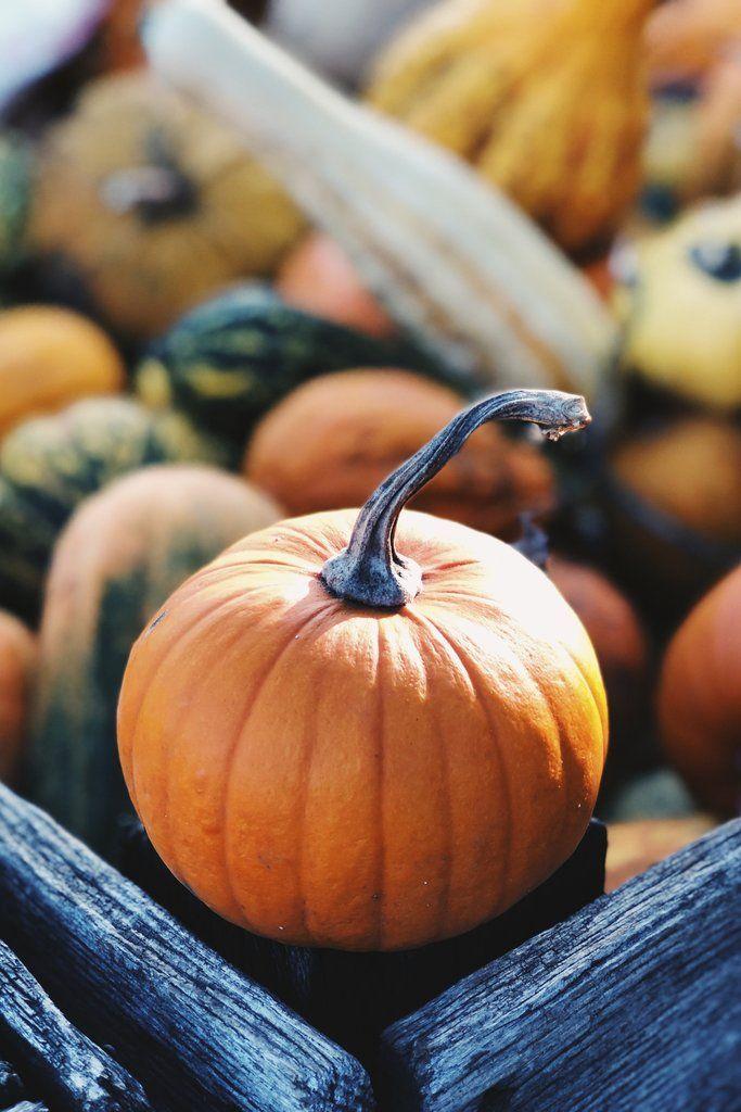 Осень обои на Айфон красивые (13)