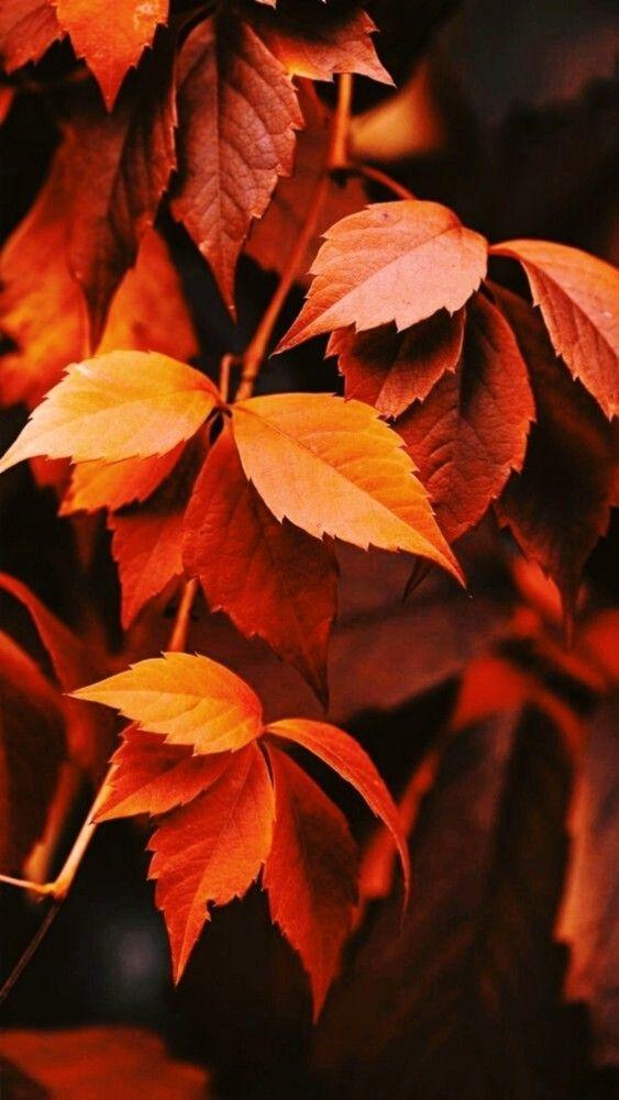 Осень обои на Айфон красивые (19)