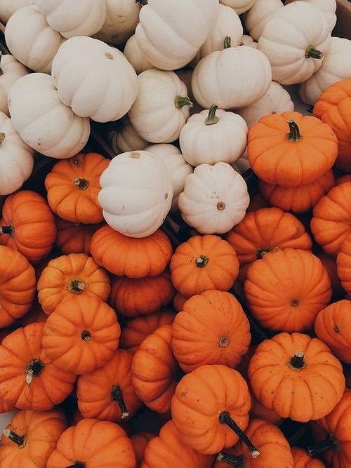 Осень обои на Айфон красивые (21)