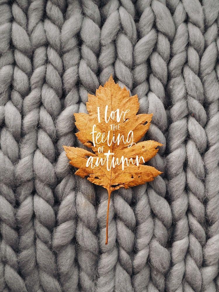 Осень обои на Айфон красивые (4)