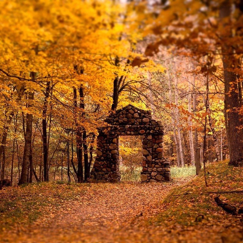 Осень обои на Айфон красивые (6)