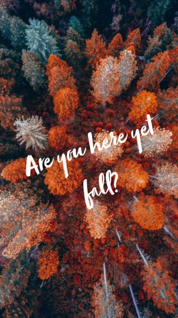 Осень обои на Айфон красивые (7)