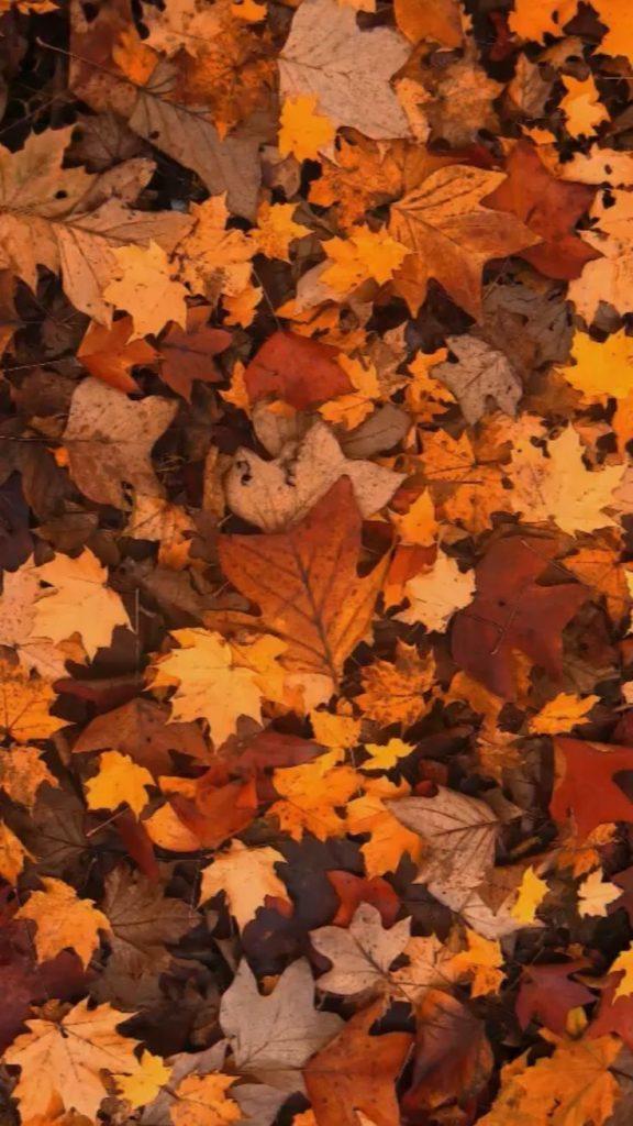 Осень обои на Айфон красивые (8)