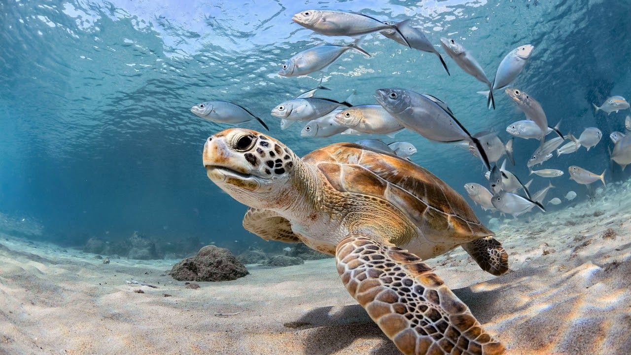 Почему жизнь океана требует охраны (2)