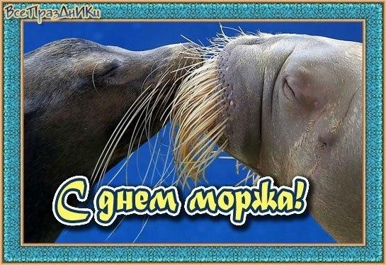 Прикольные картинки на День моржа в России (21)