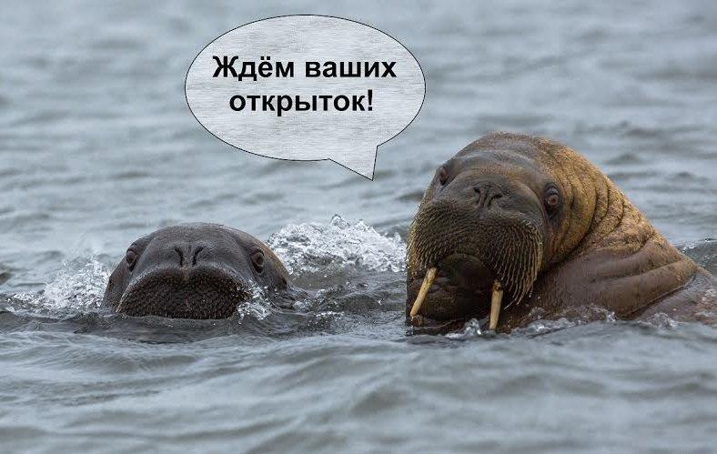 Прикольные картинки на День моржа в России (23)