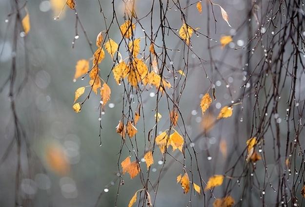 Прикольные картинки про утро ноября (3)