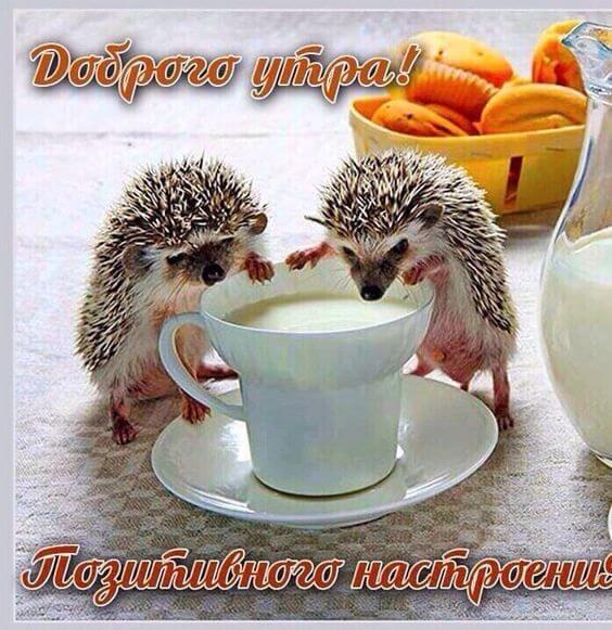 Прикольные открытки с пожеланием доброго утра008