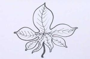 Рисунки как нарисовать осенний лист карандашом (27)