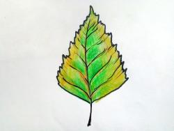 Рисунки как нарисовать осенний лист карандашом (28)