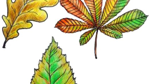 Рисунки как нарисовать осенний лист карандашом (7)
