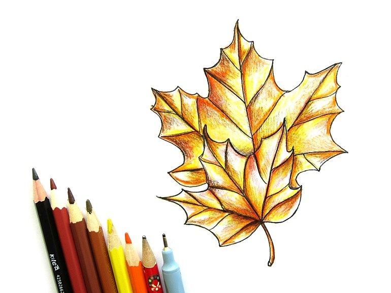 Рисунки как нарисовать осенний лист карандашом (9)