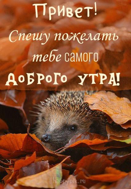 Теплого тебе осеннего утра красочные открытки (6)