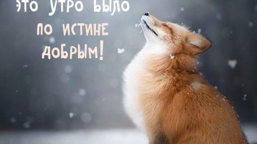 Удивительные открытки с теплым добрым зимним утром (24)
