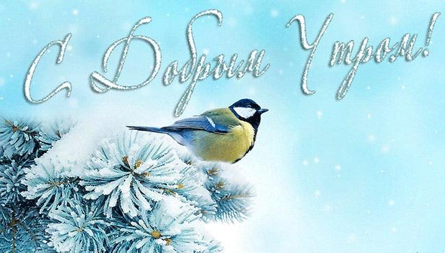 Удивительные открытки с теплым добрым зимним утром (9)