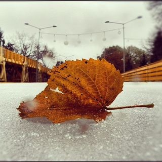 Фото на утро ноября милые и приятные (13)