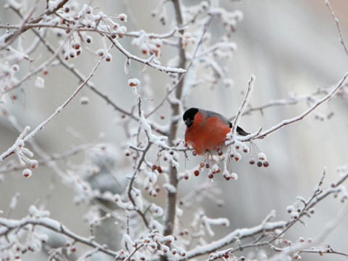 Фото на утро ноября милые и приятные (3)
