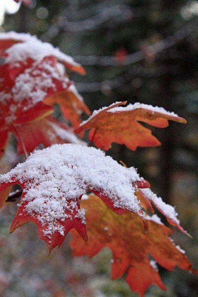 Фото на утро ноября милые и приятные (8)