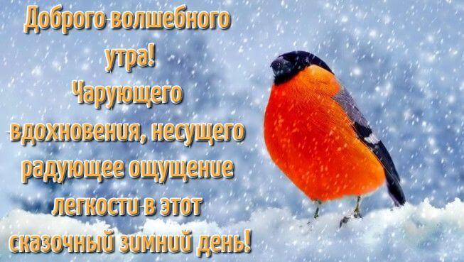 Зима с добрым утром картинки и открытки (12)