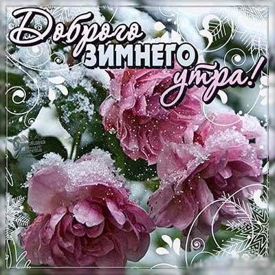 Красивые картинки зимние доброе утро (14)
