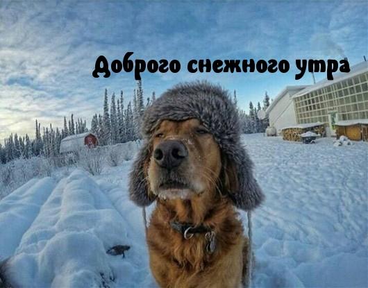 Красивые картинки с добрым снежным утром (3)