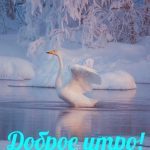 С добрым утром картинки зима