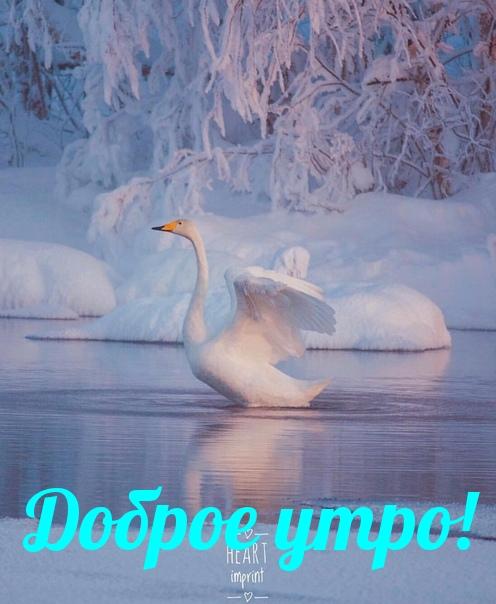 С добрым утром картинки зима (12)
