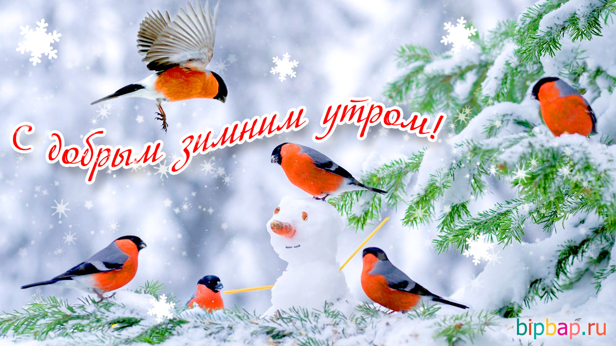 С добрым утром картинки зима (8)
