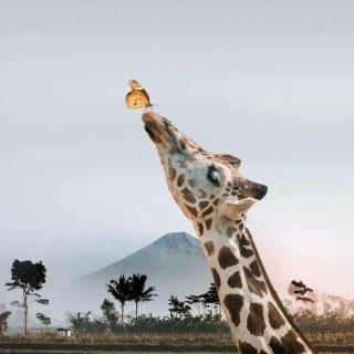Зачем жирафу такая длинная шея