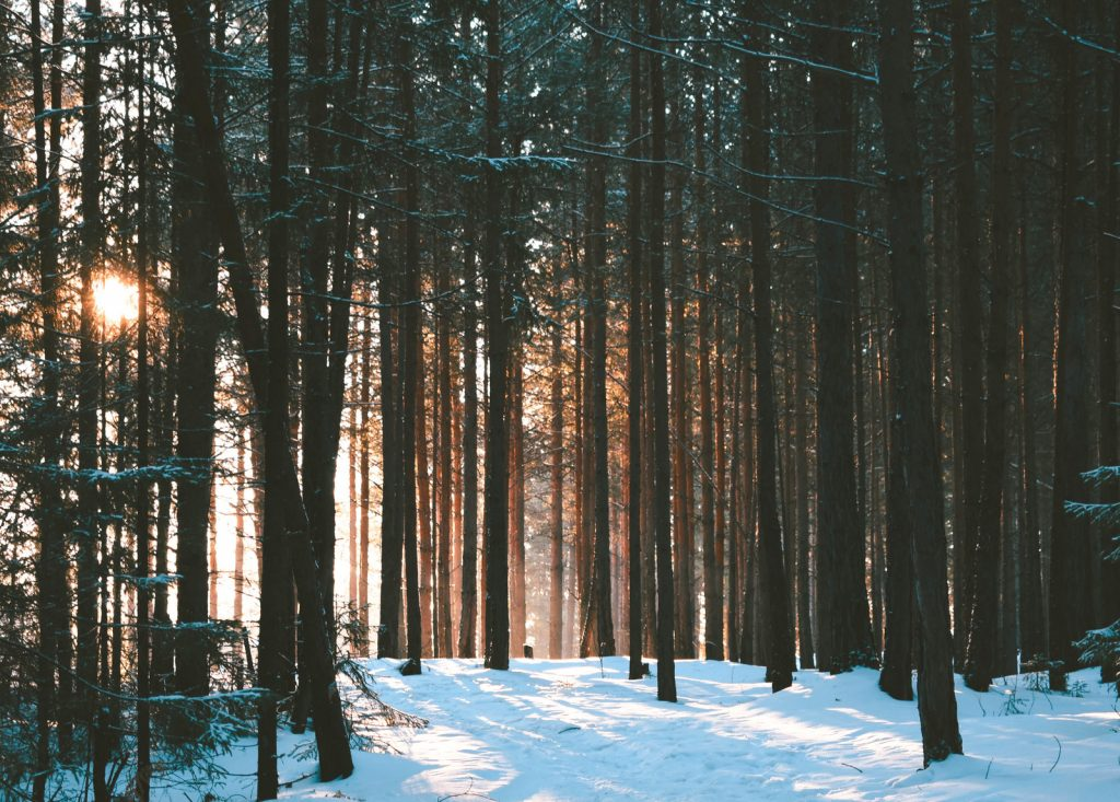 Зимний лес красивые обои для рабочего стола (1)
