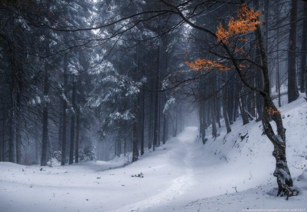 Зимний лес красивые обои для рабочего стола (10)