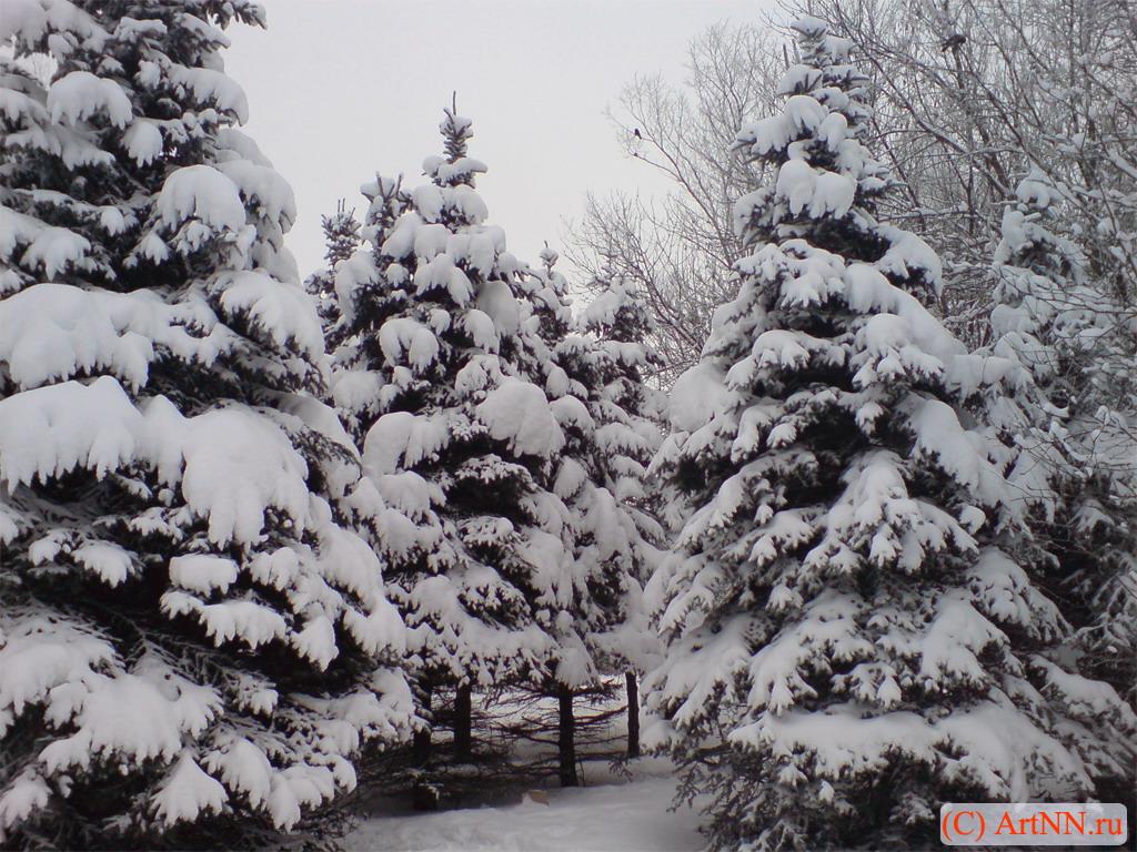 Зимний лес красивые обои для рабочего стола (12)