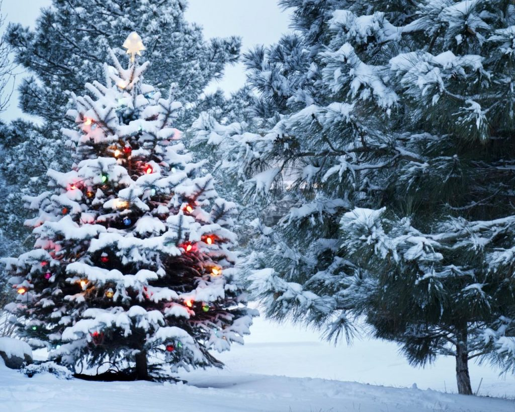 Зимний лес красивые обои для рабочего стола (13)