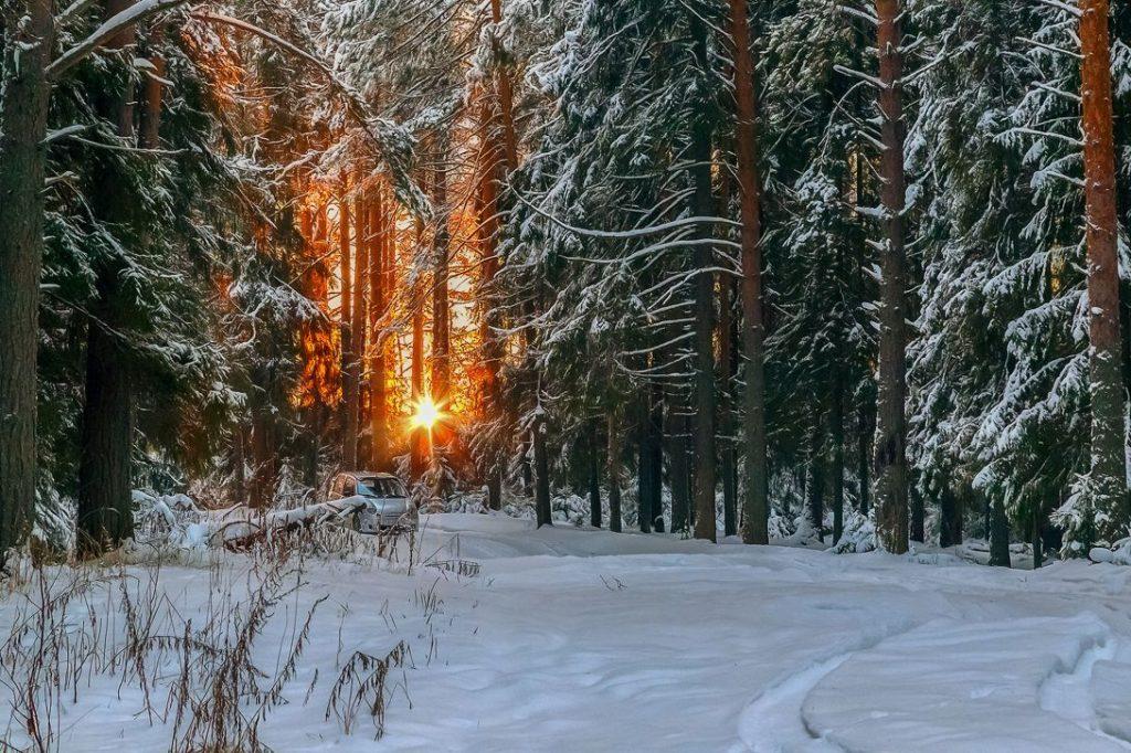 Зимний лес красивые обои для рабочего стола (14)