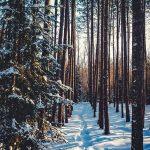 Зимний лес красивые обои для рабочего стола