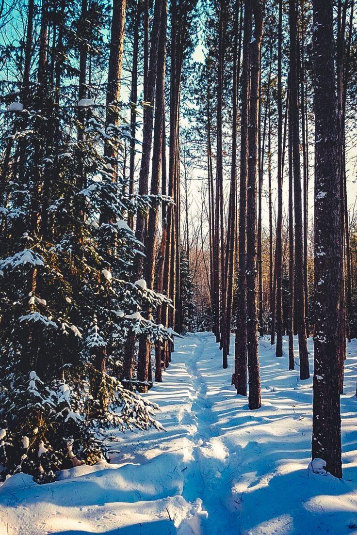 Зимний лес красивые обои для рабочего стола (15)