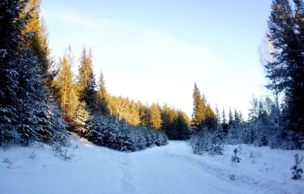 Зимний лес красивые обои для рабочего стола (16)