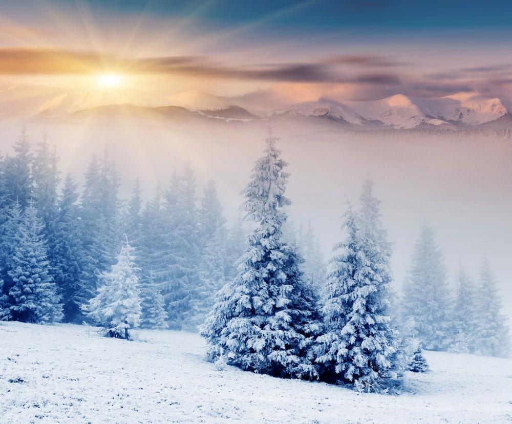 Зимний лес красивые обои для рабочего стола (17)