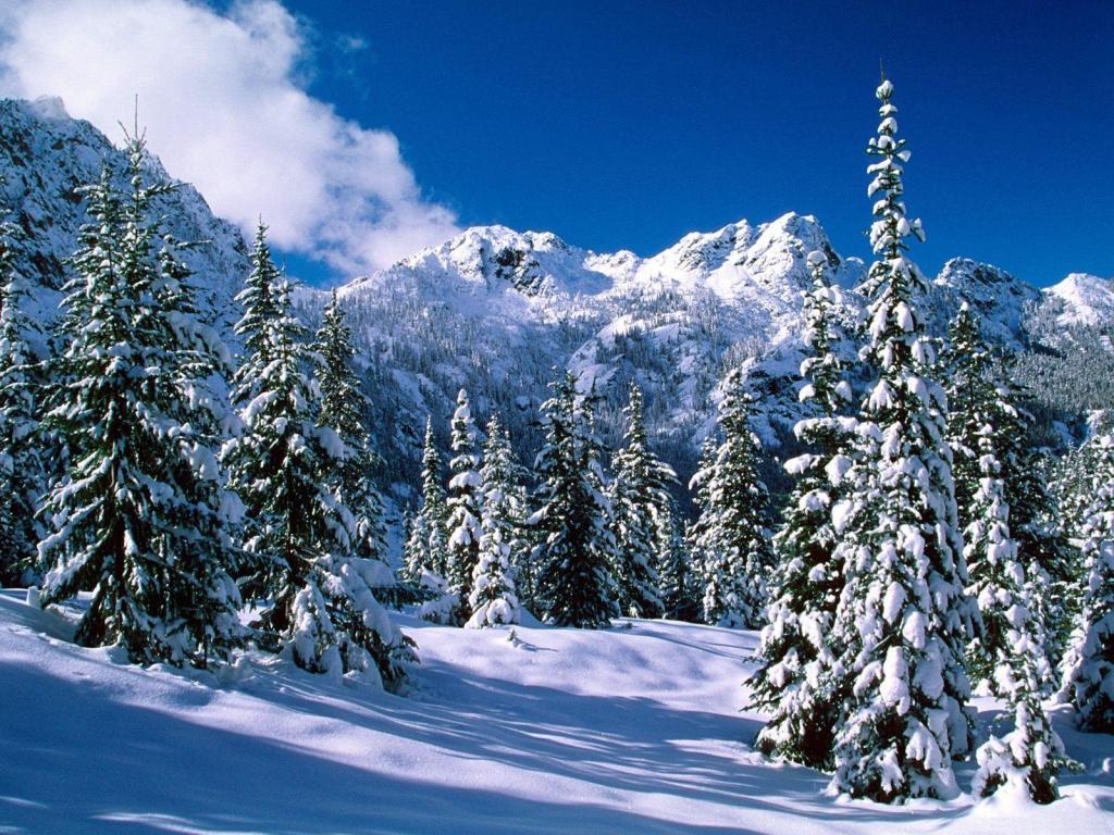 Зимний лес красивые обои для рабочего стола (18)