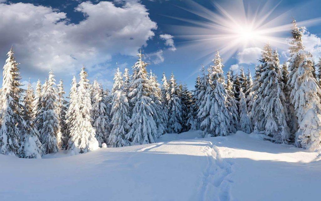 Зимний лес красивые обои для рабочего стола (19)