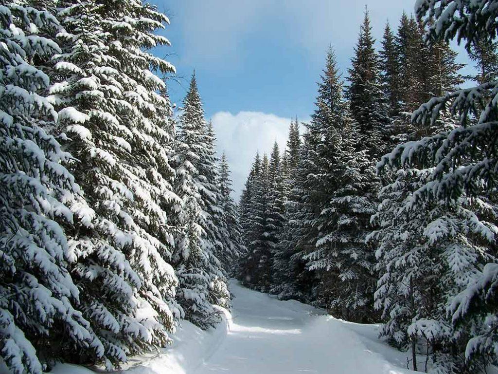 Зимний лес красивые обои для рабочего стола (20)