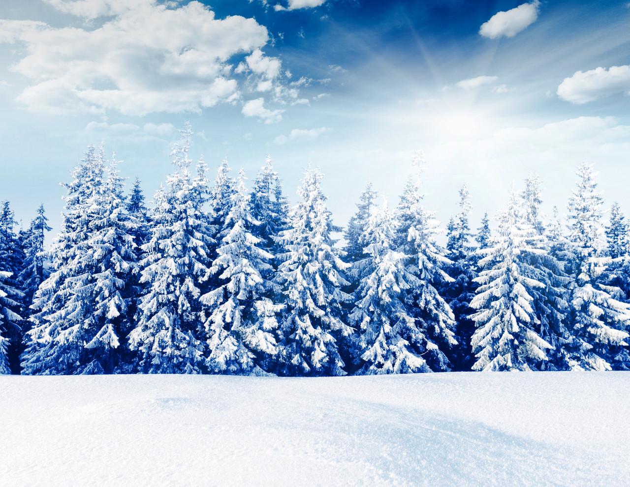 Зимний лес красивые обои для рабочего стола (3)