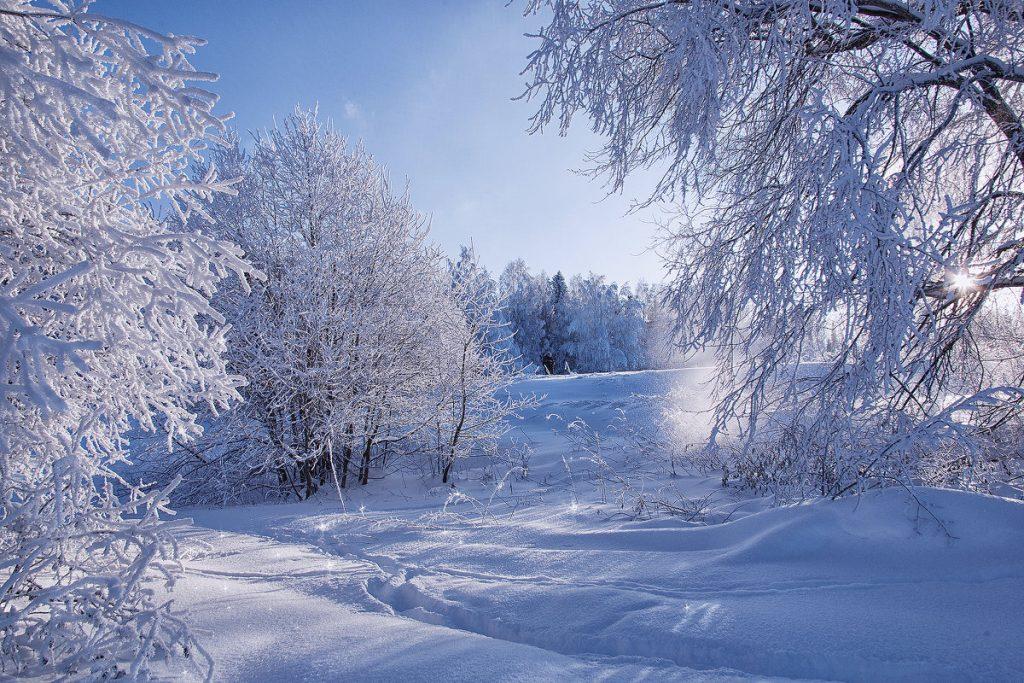 Зимний лес красивые обои для рабочего стола (4)