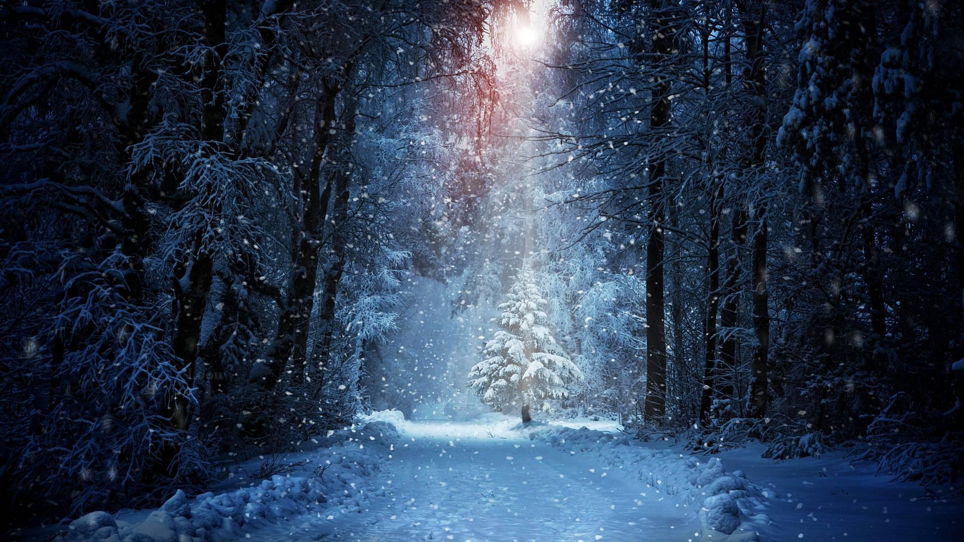 Красивый новогодний лес фото для рабочего стола