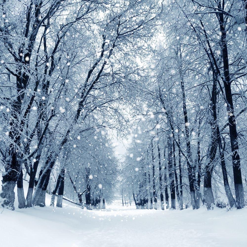 Зимний лес красивые обои для рабочего стола (7)