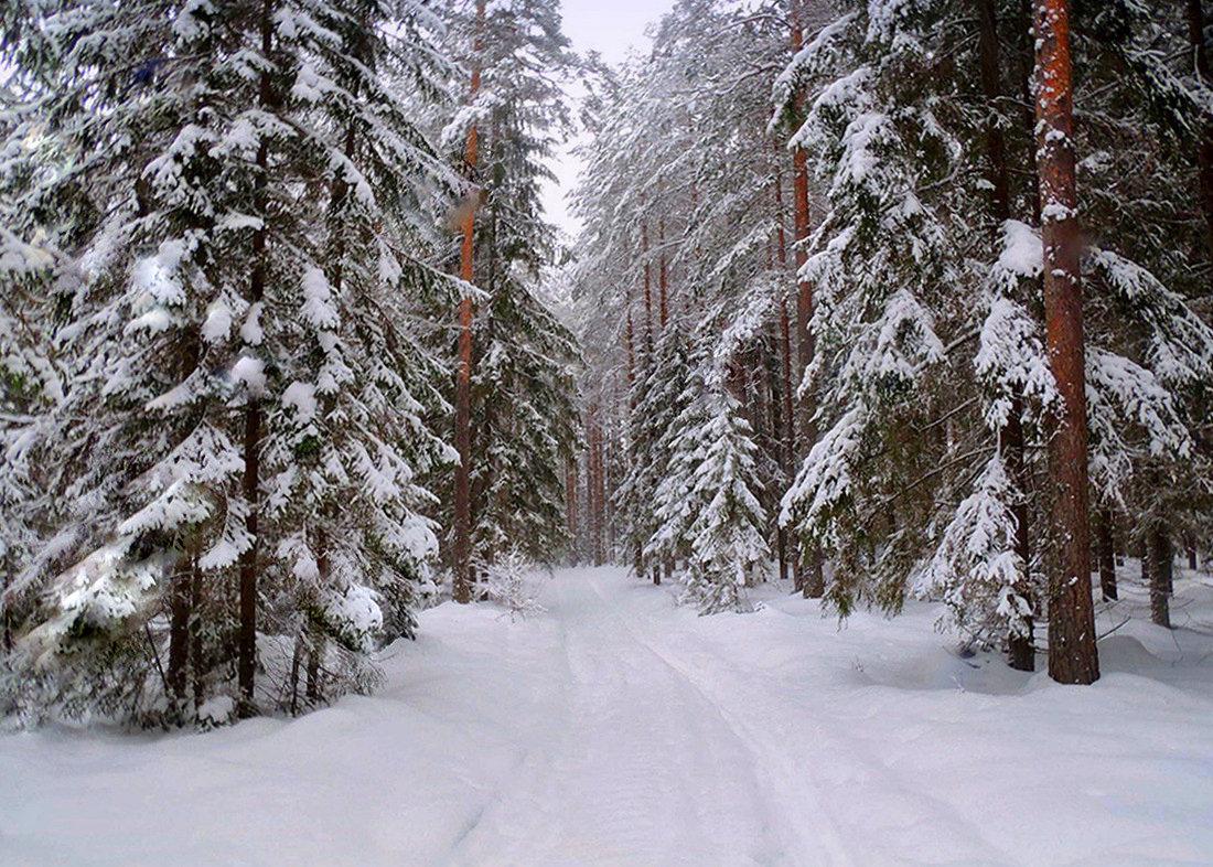 Зимний лес красивые обои для рабочего стола (8)