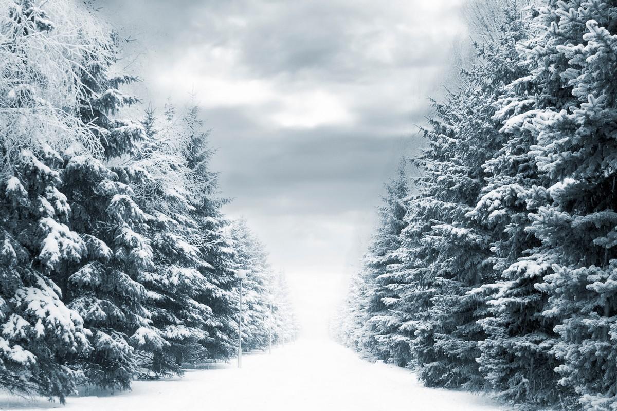 Зимний лес красивые обои для рабочего стола (9)